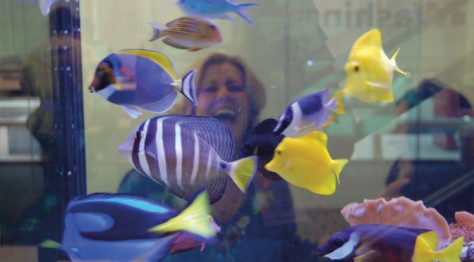 "Bloomberg ""signature"" fish tanks entice people to slow down for a moment of contemplation"